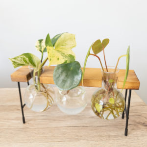 Propagation Station Glass Vase on Wooden stand