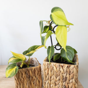 Braided Basket for your indoor plant