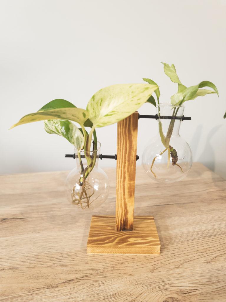 Two Vase Propagation Station