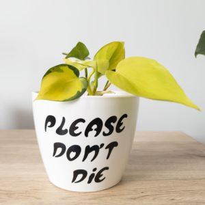 Please Don't Die pun pot