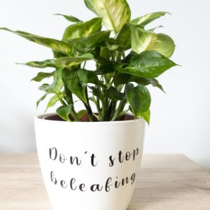 Don't stop beleafing pun pot