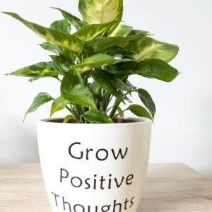 Grow positive thoughts pun pot