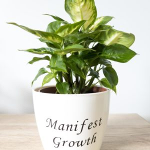 Manifest Growth pun pot