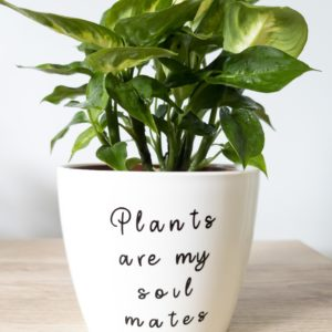 Plants are my soil mates pun pot