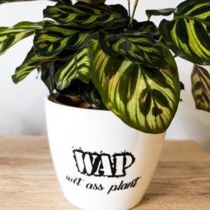 WAP wet ass plant pun pot