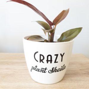 Crazy Plant Sheila