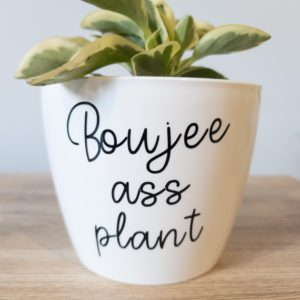 Boujee Ass Plant